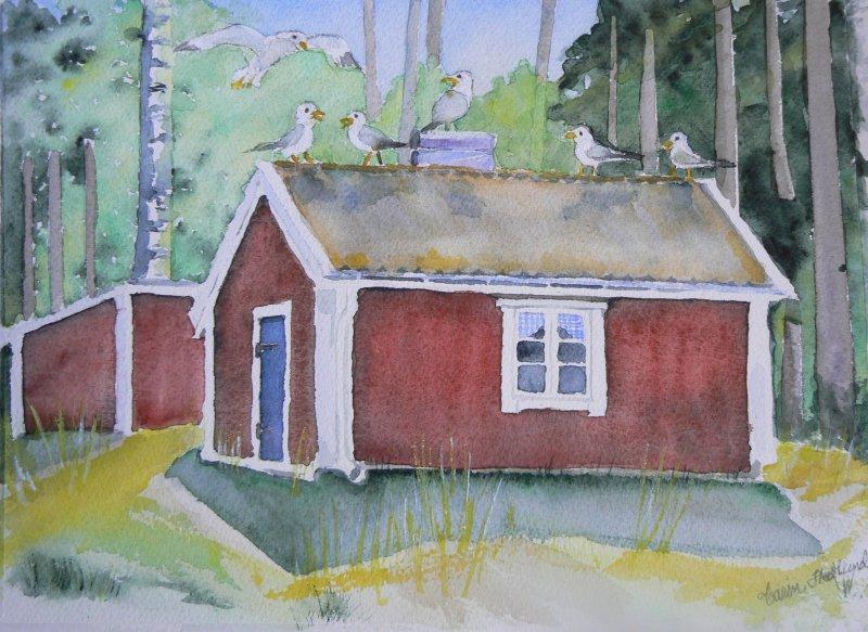 Måsar i Norrfällsviken